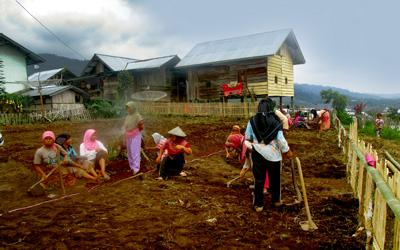 Ibu-ibu Dusun Lubuk Yamiang ikut bergotong-royong memnyiapkan lahan percontohan di samping bangunan Pondok Belajar Petani yang sedang dibangun (FOTO: A. SYAIFUL ANSHARI)
